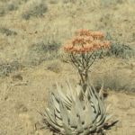 Namibia045